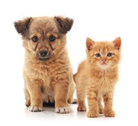 Animais domésticos são beneficiados em projetos aprovados na CCJR