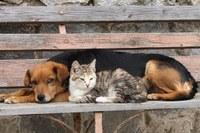 Aprovada criação de centro de acolhimento e de disque denúncia de maus tratos a animais