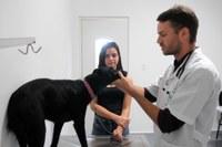 Licença para acompanhar animal de estimação é proposta por Zander