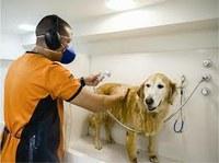 Matéria de Zander quer criar cota para deficientes nos Petshops