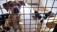 Matérias incentivam adoção de animais e campanha para castração