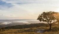 Na semana do Cerrado, Câmara prioriza projetos voltados para o meio ambiente