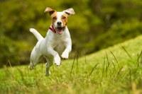 Parques terão espaços reservados para cães circularem sem coleira